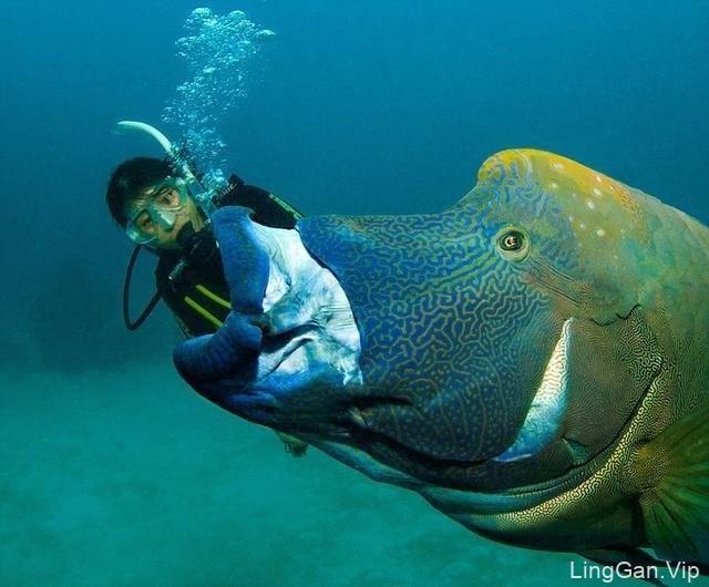 海底动物创意设计图片