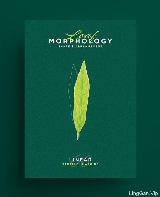国外Leaf Morphology系列树叶海报设计