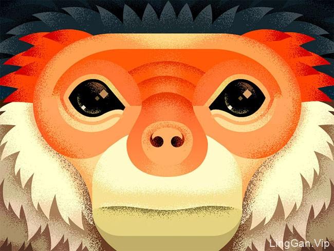 Anano Miminoshvili猴子肖像装饰插画设计