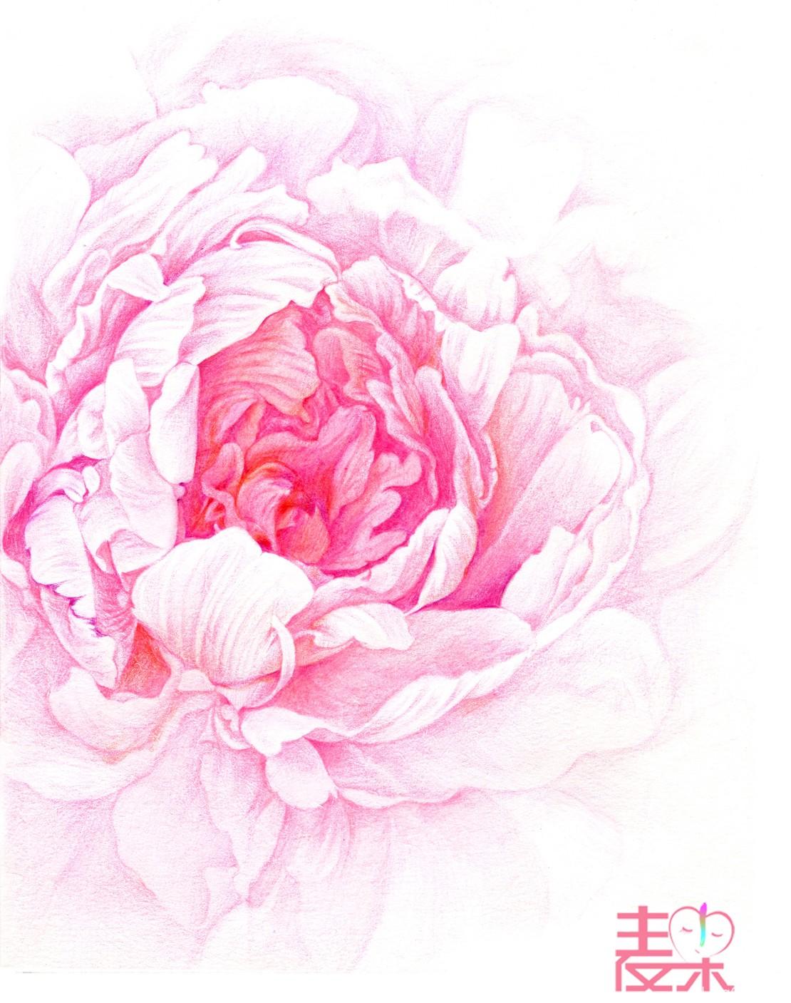 《你也可以画得很美》—花卉 牡丹花