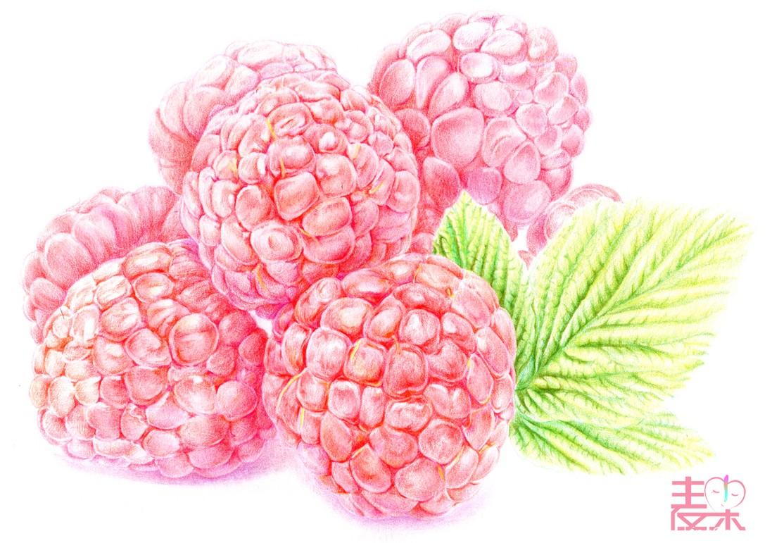 《你也可以画得很美》—果蔬 树莓