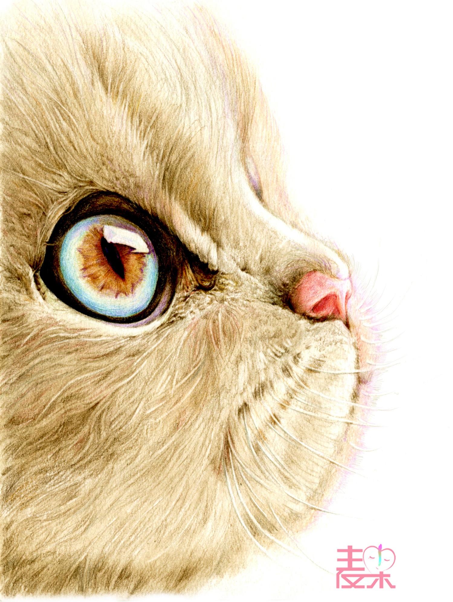 《你也可以画得很美》—动物 猫咪
