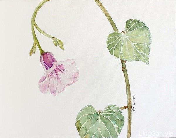 糖瓜毕业后的画画生活,手绘插画-花