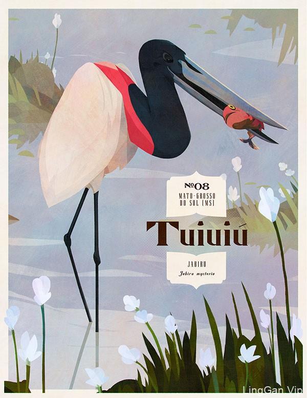 Eric Pautz复古风格的巴西鸟类插画设计