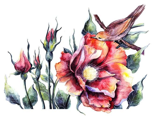 俄罗斯Tatyana Sigal植物插图设计