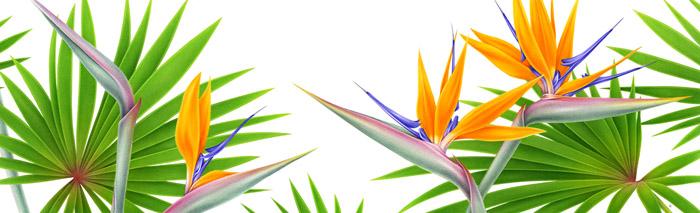 意大利Irene Laschi花卉插图设计