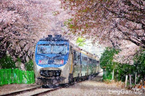 在樱花盛开的季节里-小清新唯美图片